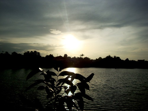 sunset sun lake plant tree mahagony