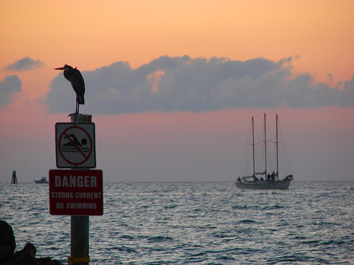 ocean sunset sea bird beach sailboat florida saltwater clearwater