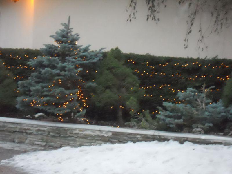 Jardin con iluminación navideña