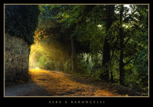 leaves foglie sunrise alba olympus tuscany toscana zuiko controluce baroncelli bagnoaripoli treesdiestandingup