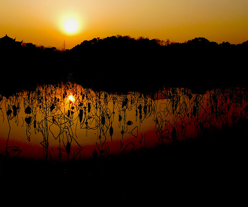 Lotus Sun Lines | by everlutionary