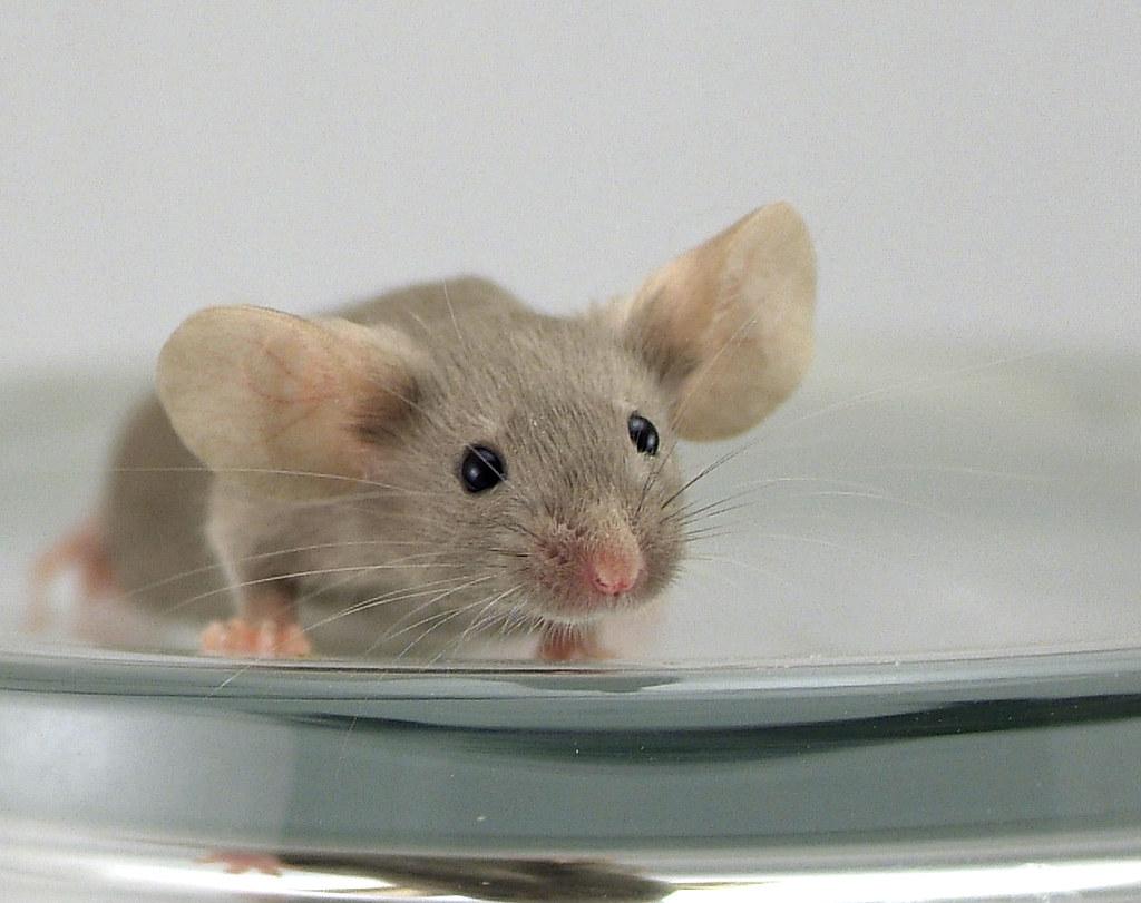 Ольги, мыши картинки смешные