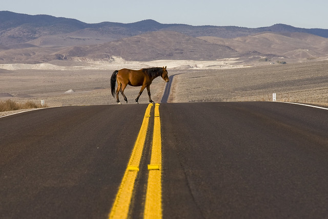 Horse Xing ( free range horse wandering through the Nevada desert)