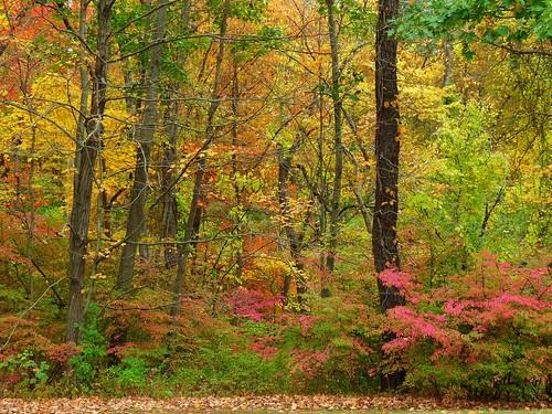 middletown autumn wadsworth johnjmurphyiii park connecticut fall newengland october usa 06457 foliage