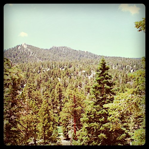 california statepark trees mountains square view palmsprings squareformat 2010 mtsanjacinto instagramapp