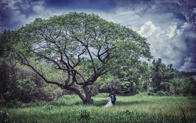 草地拍攝微婚紗