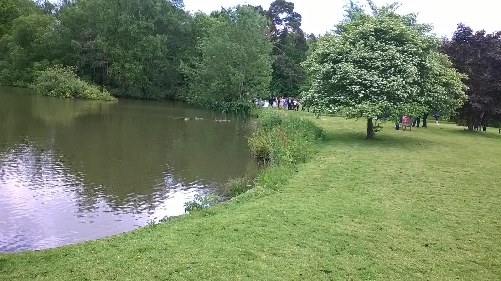 Ducks greet wedding party Hascombe village pond