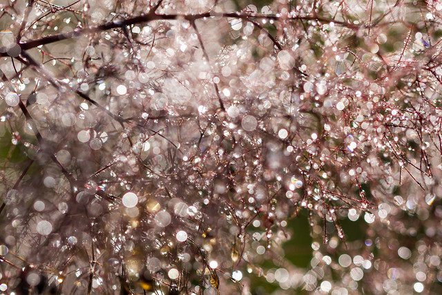 Bokeh shower