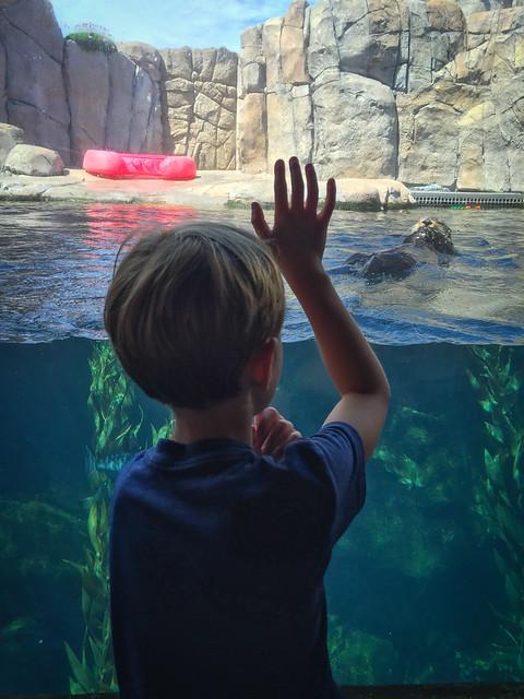 Monterey Bay Aquarium 3242