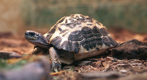 Greenville Zoo 05-24-2011 - Turtle 1   by David441491