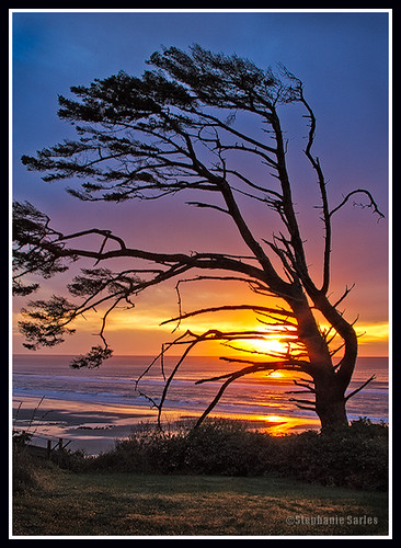 ocean sunset usa tree beach water oregon hotel coast inn waves pacific or wildlife resort seals oregoncoast centralcoast yachats retreatcenter oregonhouse