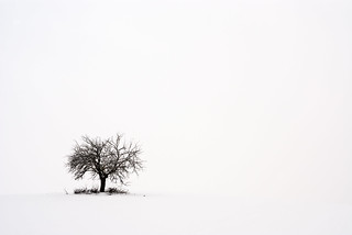 Grief of a lonely tree | by Nanophoto69