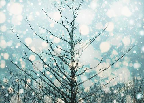 blue winter sky white snow tree nature weather silhouette season landscape drops bokeh circles bare branches february snowfall