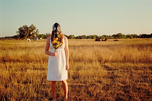 field mask gas sunflowers