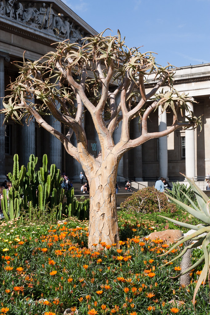 Mountain Aloe, Star of the Veldt daisy,  Tree Euphorbia.  The British Museum allows photo shooting providing there is no financial gain.  Please respect their policy