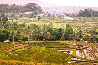 Rice Plantation @ Jatiluwih   by Bertrand Duperrin
