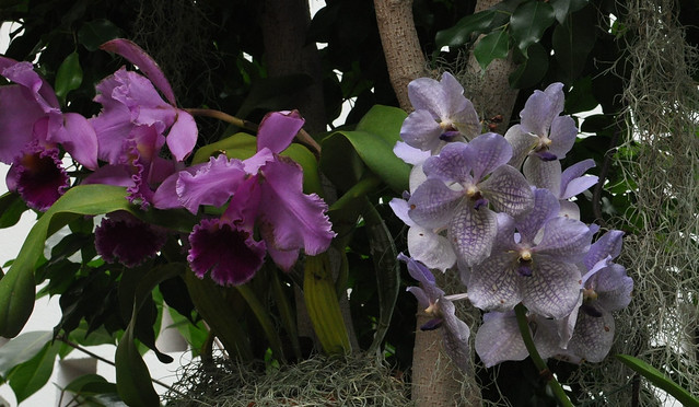 Orchid058