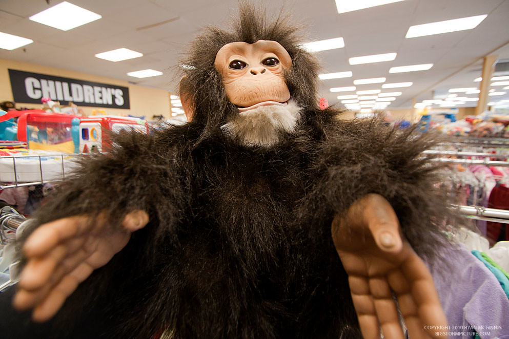 Scary Monkey Doll | A scary monkey doll found at a thrift st… | Ryan