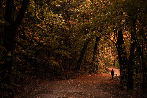 park autumn trees light fall nature leaves rain gallery alone shadows silent quebec path walk montreal parks hike trail hood lonely hooded