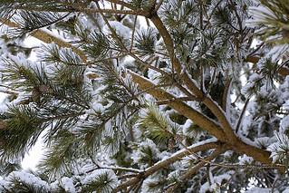 Under a Snowy Tree | by Matthew Juzenas
