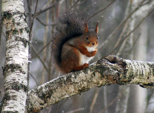 Any Nuts to Spare? | by Steffe