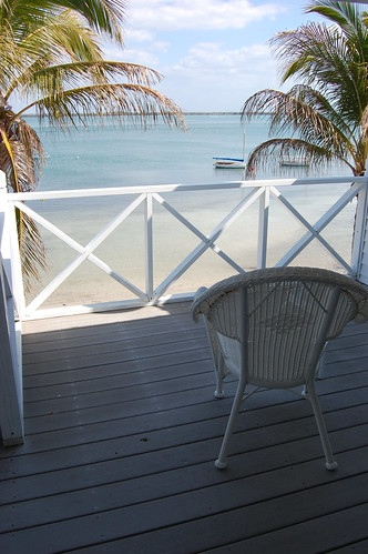 trees tree club island florida palm useppa