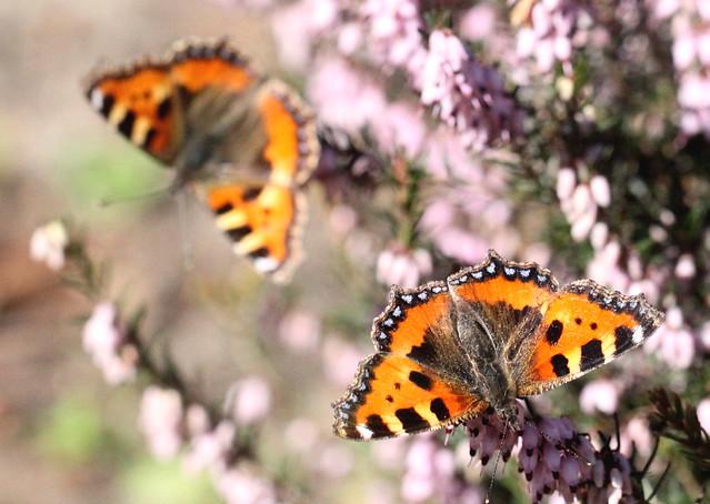 early butterflies , explored! ( #417 )