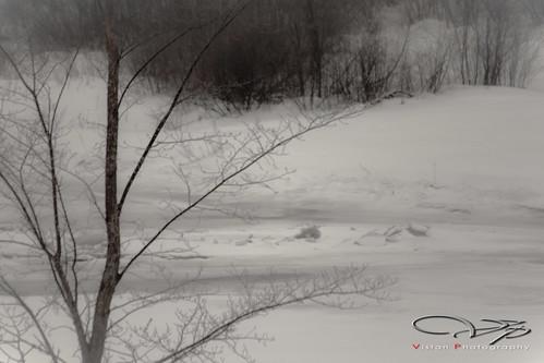 winter bird river landscape outdoors scenery novascotia oxford phesant geolocation geocity camera:make=canon exif:make=canon geocountry camera:model=canoneosrebelt1i geostate exif:model=canoneosrebelt1i exif:lens=ef70300mmf456isusm exif:focallength=300mm exif:aperture=ƒ56 exif:isospeed=100 geo:lon=63841111111112 geo:lat=45750627777778