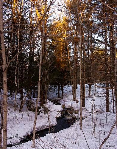 trees winter sunlight snow cold water forest sunrise maine flowing sharedperspectivesphotography