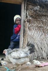 Jan/2009 - A girl shares the entrance to her house with a family of chickens in Oyo State, Nigeria (photo credit: ILRI/Stevie Mann).