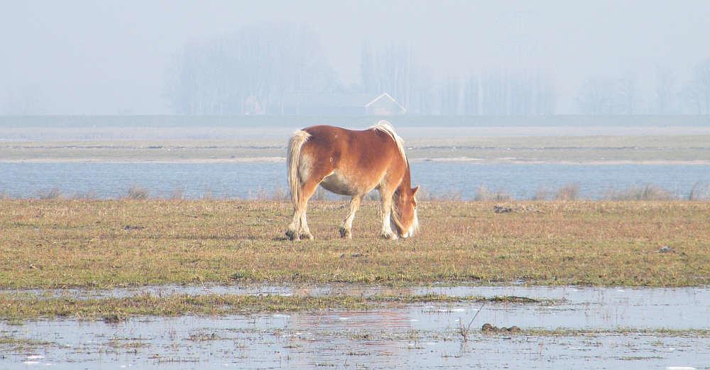 Wetlands horse