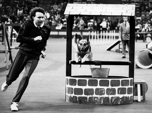 Early years of agility introduced to Crufts in 1978