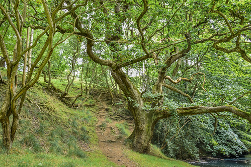 uk england tree green nature river outside nikon durham northeast f71 hdr 18mm countydurham aucklandcastle gaunless aucklandpark d7200 nikond7200 bishauckland
