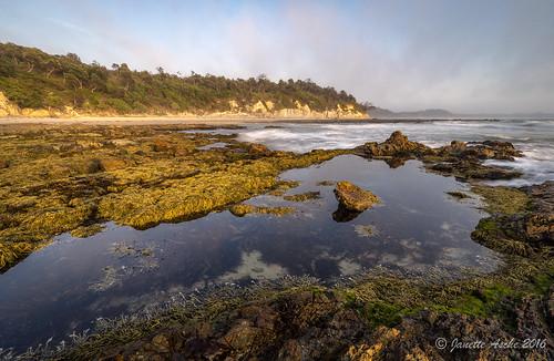 2016 australia diggerscamp nsw neptunesnecklace newsouthwales yuraygirnationalpark beach cliff coastal longexposure ocean rockplatform rocks sea seamist seascape seaweed sunrise sonya7r