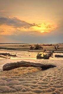 Driftwood Beach | by Kay Gaensler