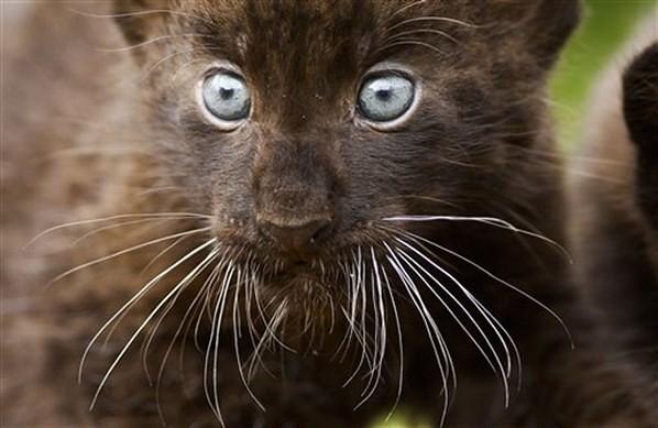 Watch Black Panther Online Free