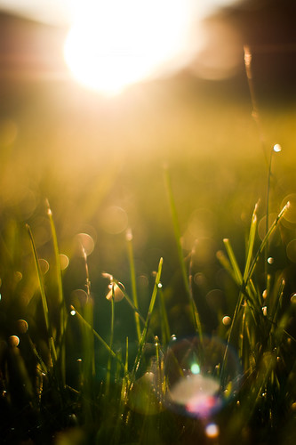 morning light summer sun sunlight macro fall water grass sunrise 50mm prime spring warm day minolta bright bokeh sony dew flare alpha 50 daybreak sunflare f17 a350 breay mkottman23