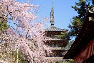 Daigoji Temple | by filmmaker in japan
