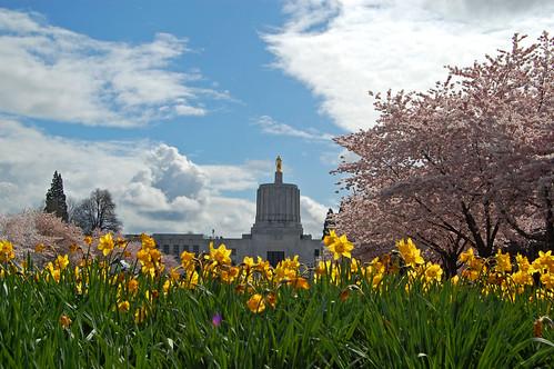 trees flower tree grass oregon cherry 5 capital blossoms april 桜 sakura salem blooms viewing hanami 花見 d40 edmundgarman
