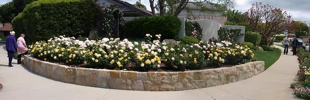 K4247392_5 110424 Dan Bifano front rose garden curve ICE rm stitch98