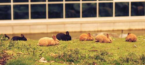 bunnies   by moonstream