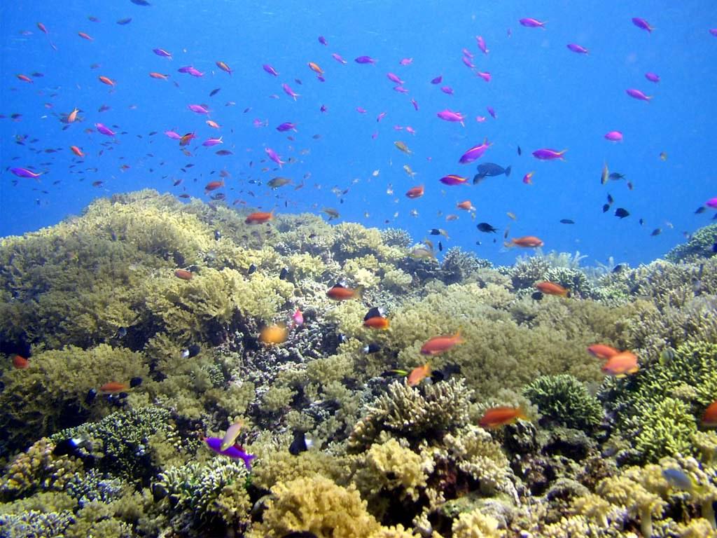 Dunia Bawah Laut Bunaken Wallpaper Danu Prawiro Flickr