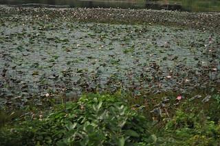 Near Somanathapura | by Maurya Rohit