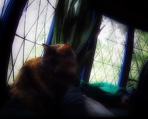 Punker in bay window