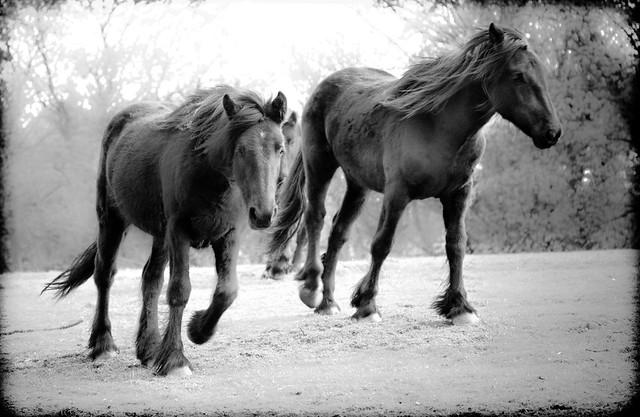 Horses field