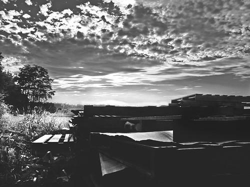 sunset sky wooden pallets skids treeswoodsgrassfieldweedscloudshorizonfarmswadsworthohiocanoneosdigitalrebelsummersunnycloudywarmfunblackandwhiteinsustrialwarehouse