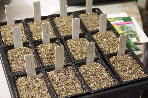 Coleus and Herbs Sown | by joeysplanting