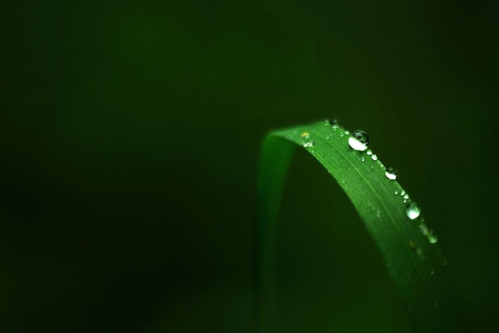 Kiss the rain by annfrau
