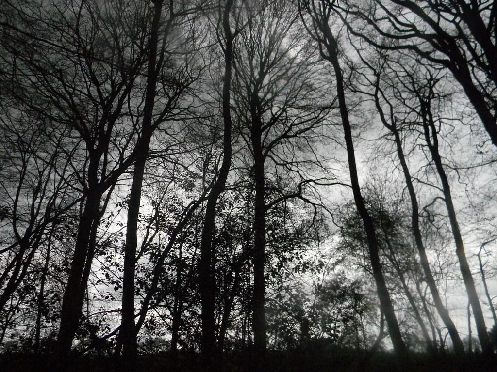 tree sillhouettes Goring Circular (YHA map walk)