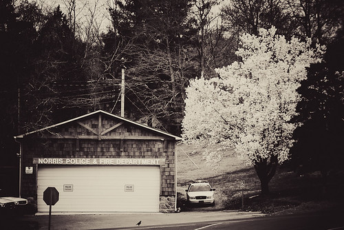 park morning flowers tree nature beauty clouds rural sunrise outdoors photography town photo spring tennessee police cop policestation firedepartment norris smalltown easttennessee norrislake andersoncounty